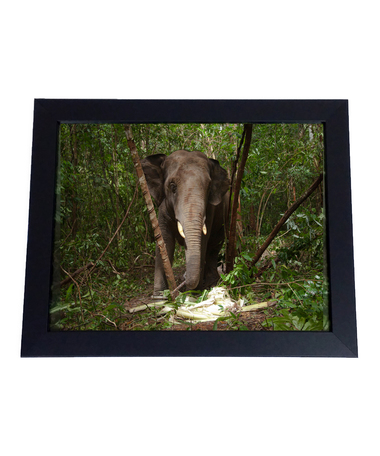 Provide medical care for an animal rescued from the illegal wildlife trade and receive an 11x14 framed photograph
