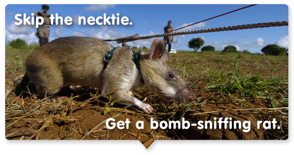 Skip the necktie. Get a bomb-sniffing rat.