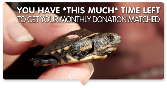 Hurry! One day left to get your donation matched