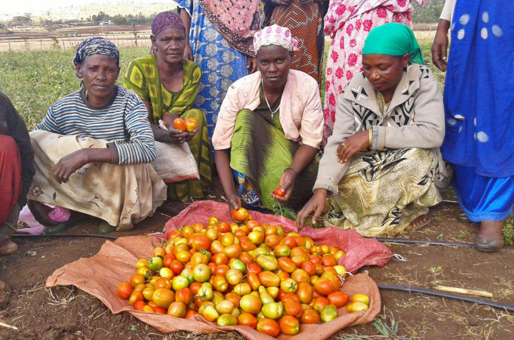 gardens give hope health and income in east africa