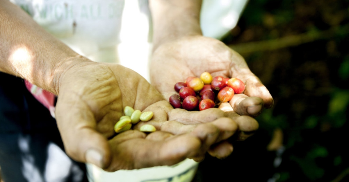Two hands holding differently-colored berries. Diversificar fuentes de fondeo