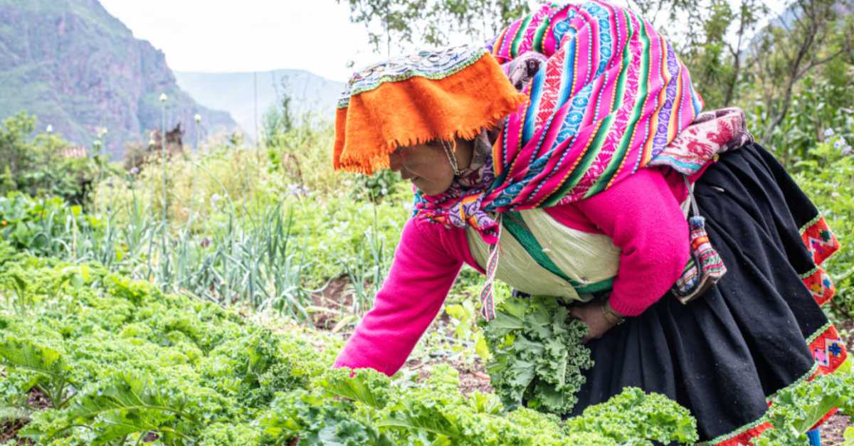 Planting seeds in Peru. Innovative nonprofit solutions to COVID-19