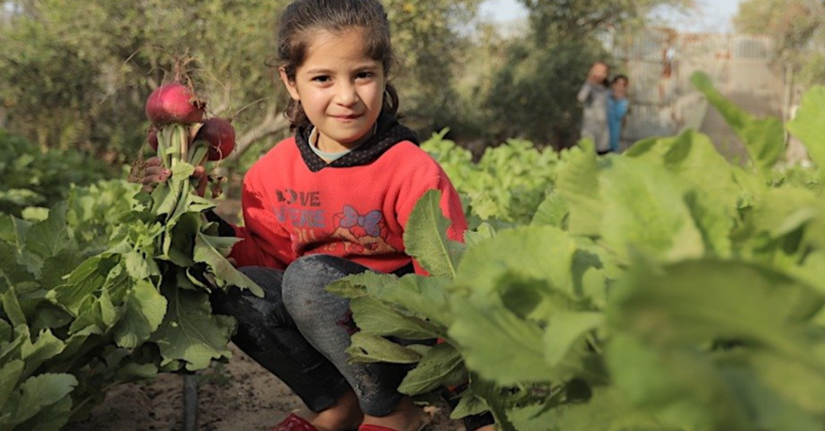 Child in her new family garden. Innovative solutions COVID-19