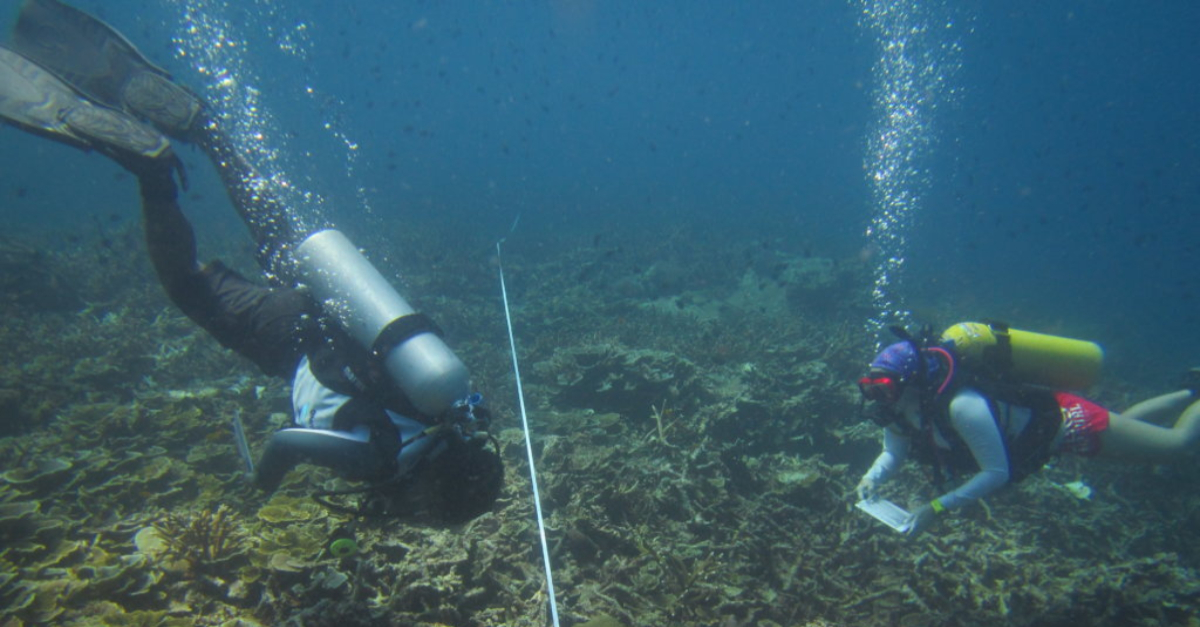 Reef Check Malaysia checking the health of coral reefs to fight climate change.