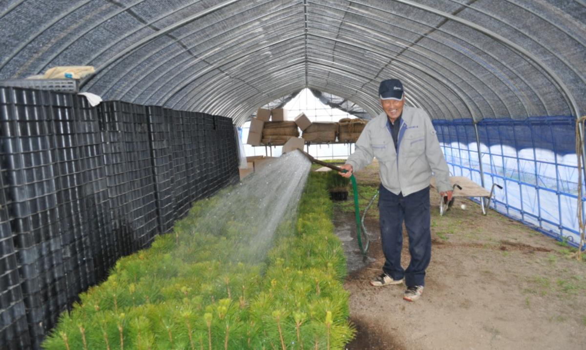 Mr. Mori watering seedlings before transplanting them.