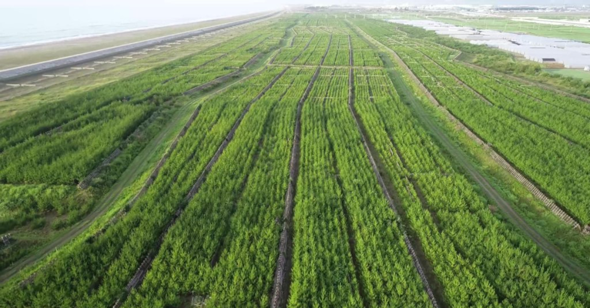 Aerial shot of the coastal forest after ten years of restoration.