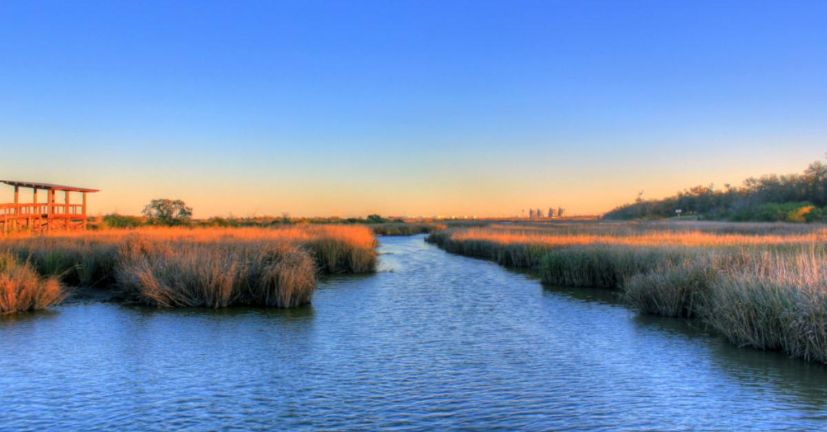 Wetlands in Houston, Texas