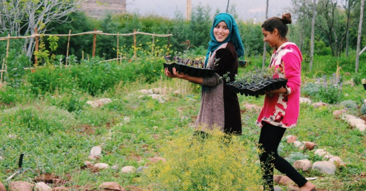 Two people are carrying a basket of seedlings in a community garden