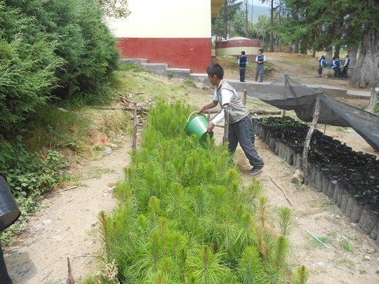 Tree Nursery in Alvaro Obregon Elementary School