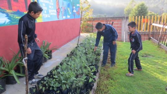 Getting rid of weeds at El Capulin's nursery