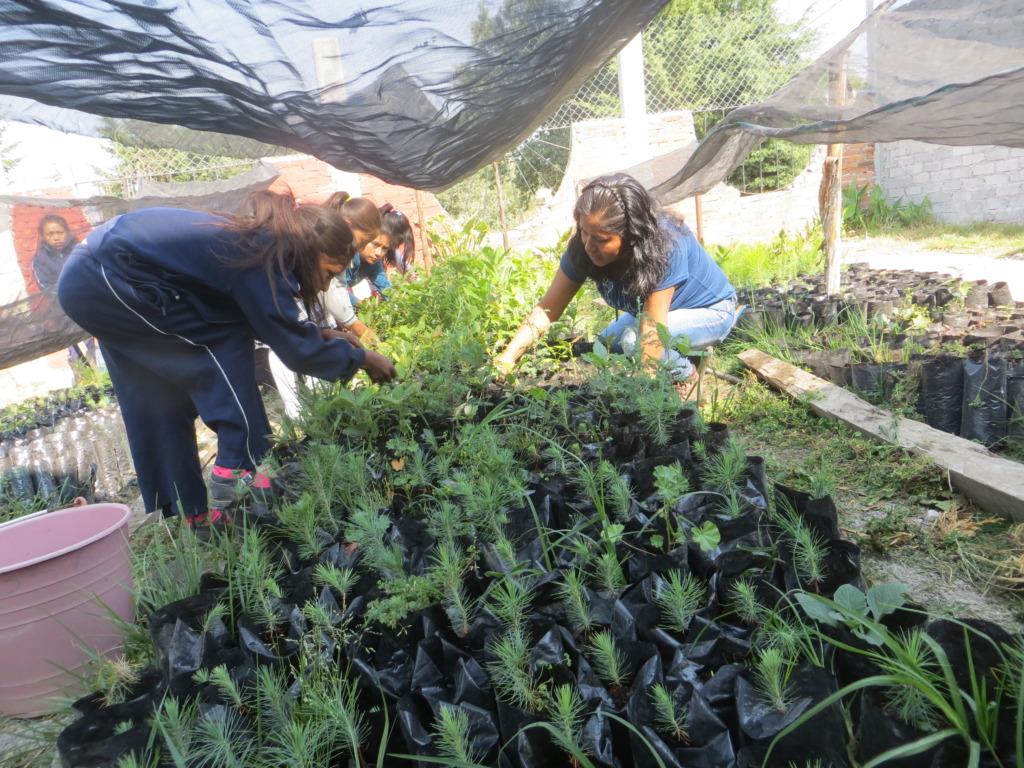 Mother & Daughters at F.Serrato Weeding Seedlings