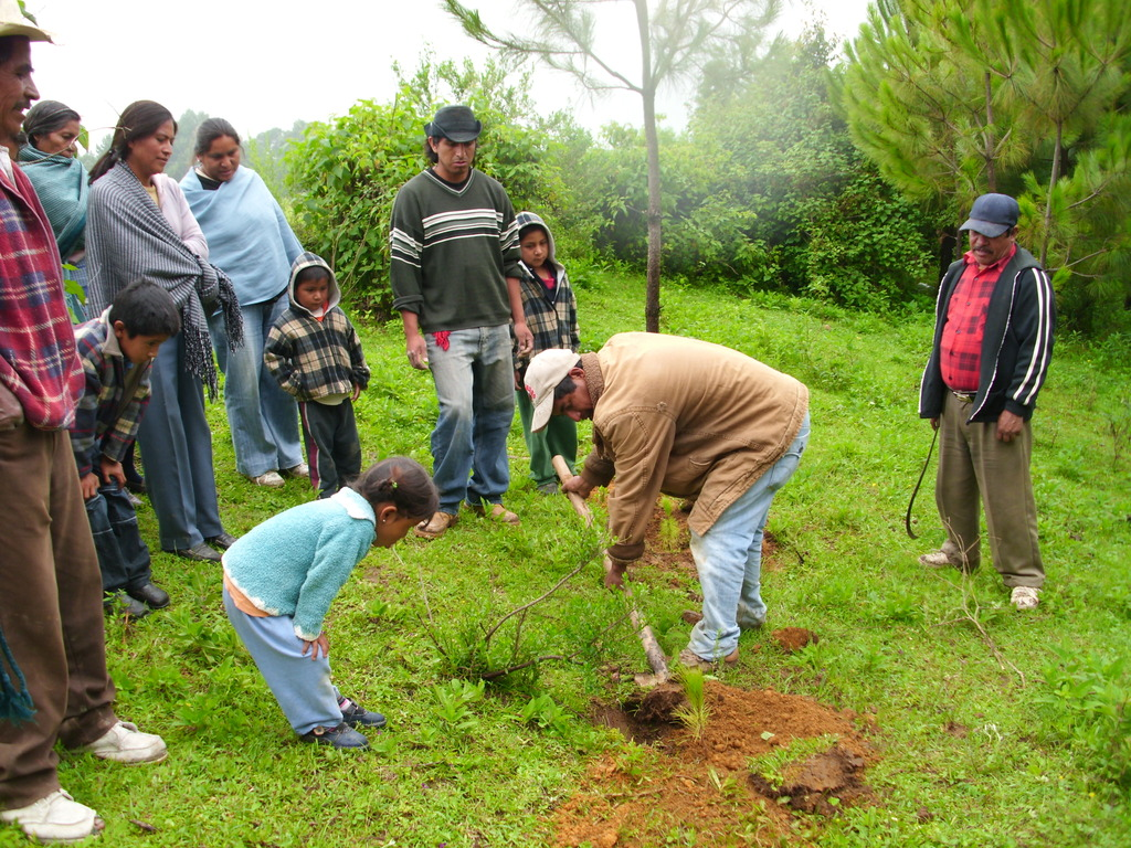 A family planting trees together