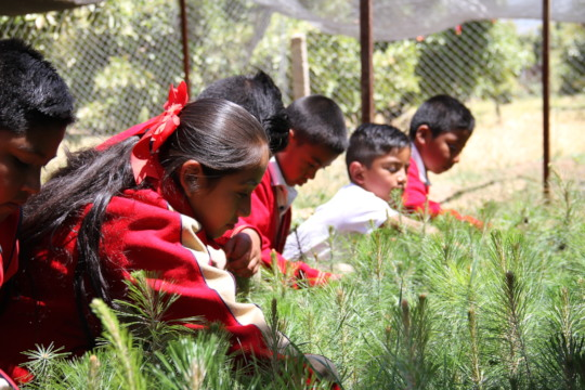 Children from El Santisimo working on nursery