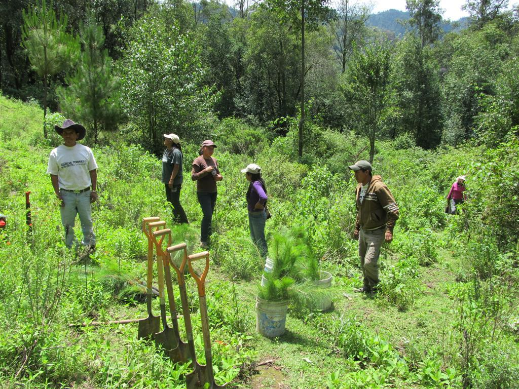Summer 2013 Reforestation