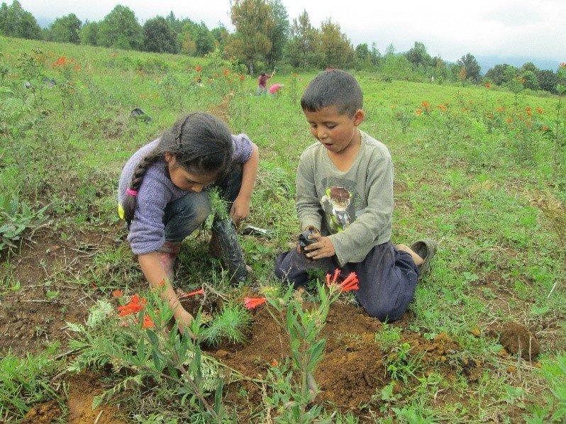 Kids planting a pine tree