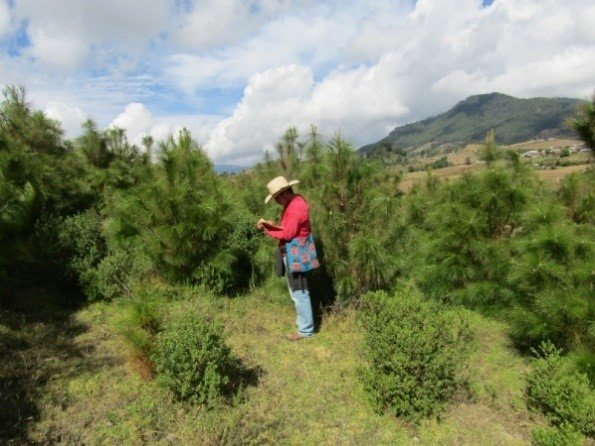 Man in the reforestations in C. Morales community