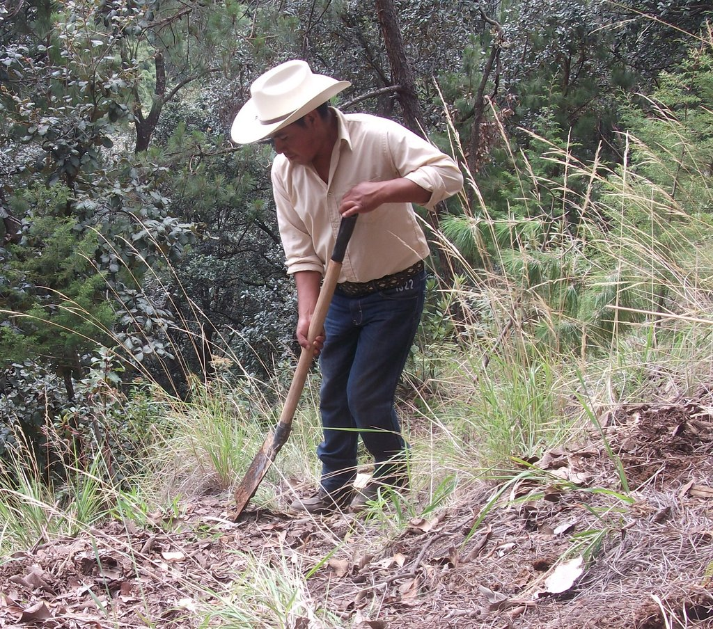 Reforestation leader digs to plant seedling