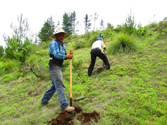 Campesino digging to begin planting trees