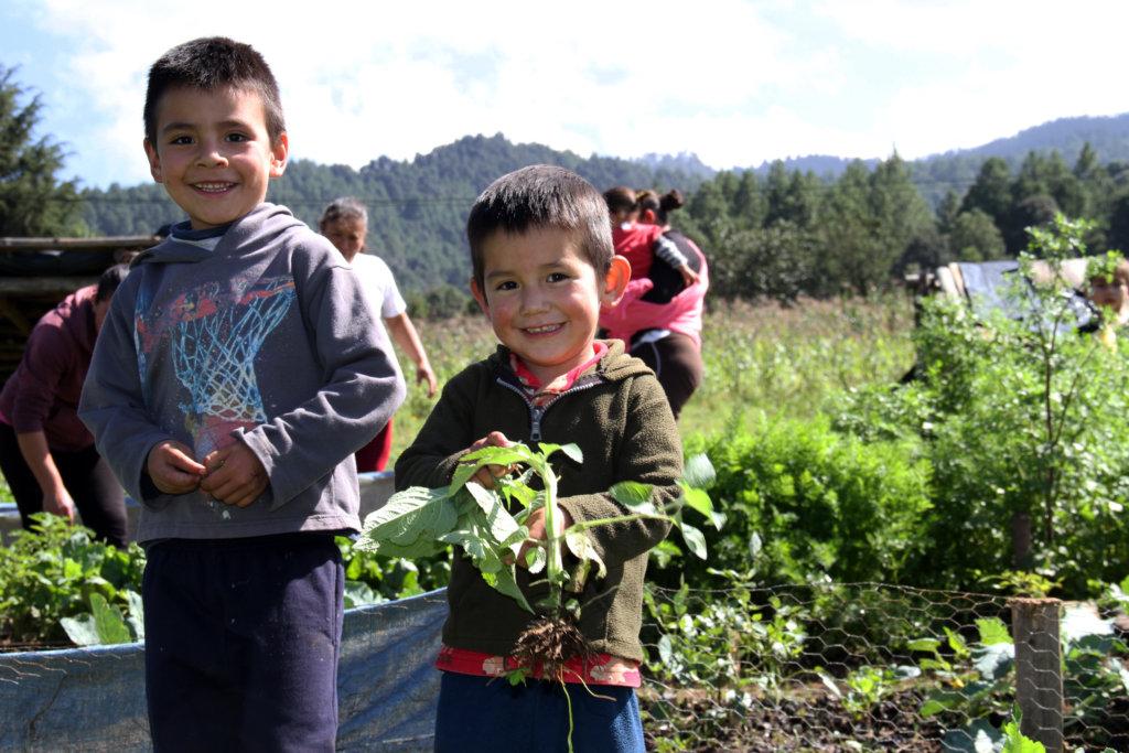 Boys happily planting seedlings