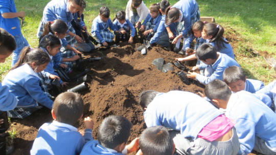 Schoolchildren doing maintenance on their nursery