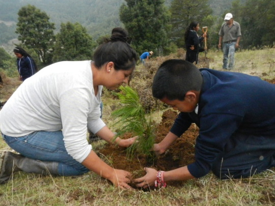 Mother and her son planting a pine