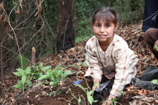 Girl plants pine in C.Morales Indigenous Community