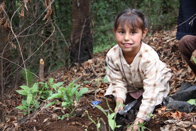 Girl plants pine in C.Morales Indigenous Community