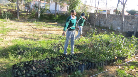 Boy watering the seedlings with a hose at D. Ojeda