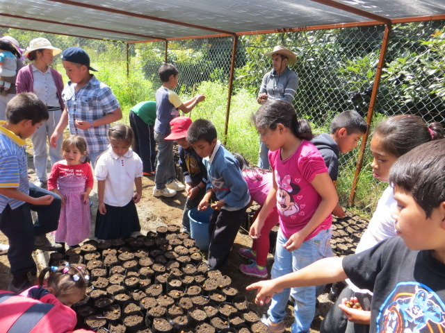 Tree Nursery at a School in El Santisimo