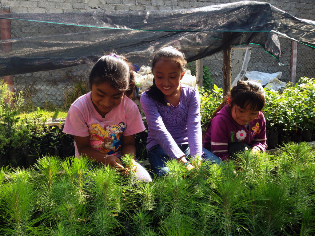 Girls looking after their growing trees