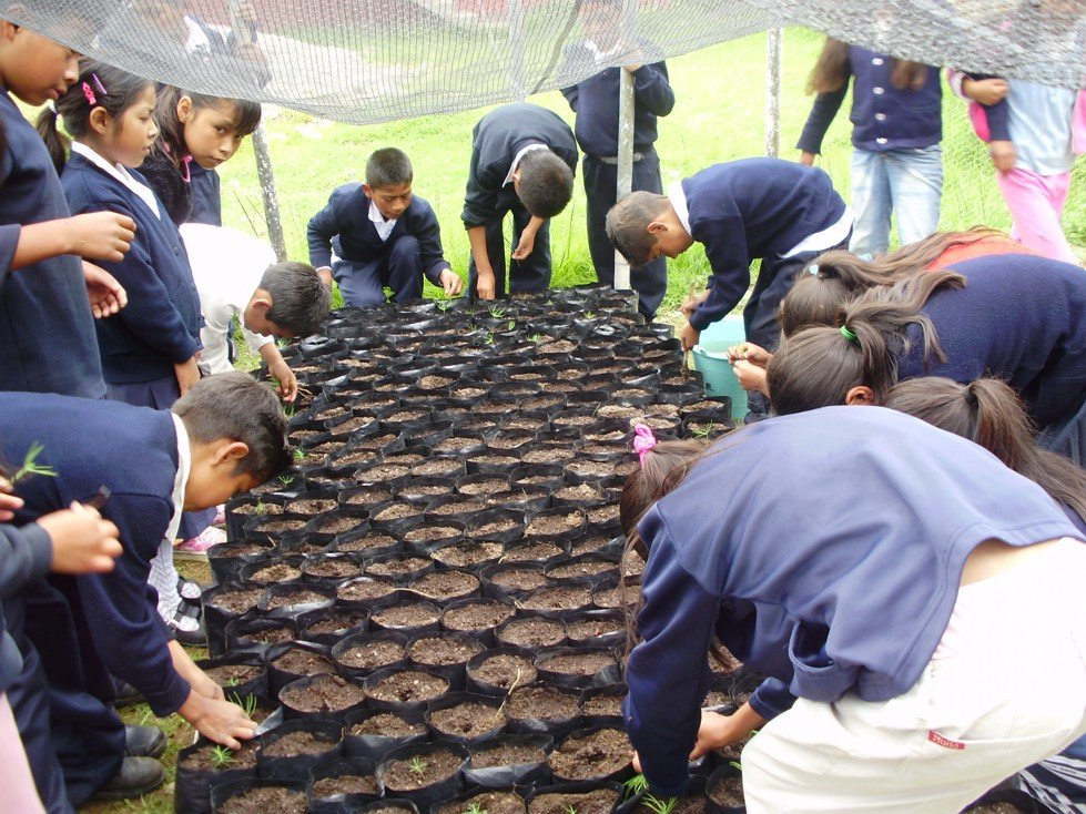 Reforestation gives green and it all starts with seedlings from a tree nursery.  Children from the Francisco Serrato Indigenous Community have their own school tree nursery which provides seedlings to plant and reforest the monarch butterfly