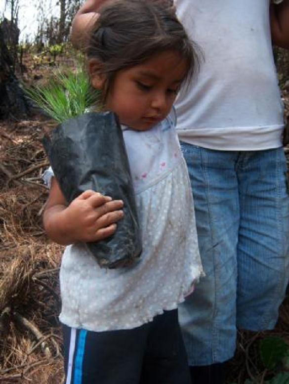 MBF engages families in reforestation to give knowledge, hope and green! This little girl from the Francisco Serrato indigenous community happily carries a seedling from a local community tree nursery to plant in the Mexican forest where monarchs arrive every winter after migrating from Canada.