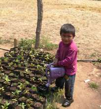 Delfino watering seedlings for the tree nursery