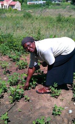 Rosemary Nkhwashu inspects the garden