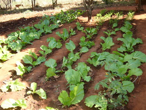 Nkhensani's food garden for her and her sister
