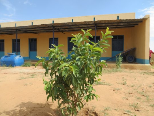 Trees grow at our Kindergartens