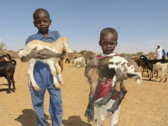 Our Goat Loans help children flourish
