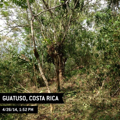 Illegally cleared forest in Guatuso, Costa Rica