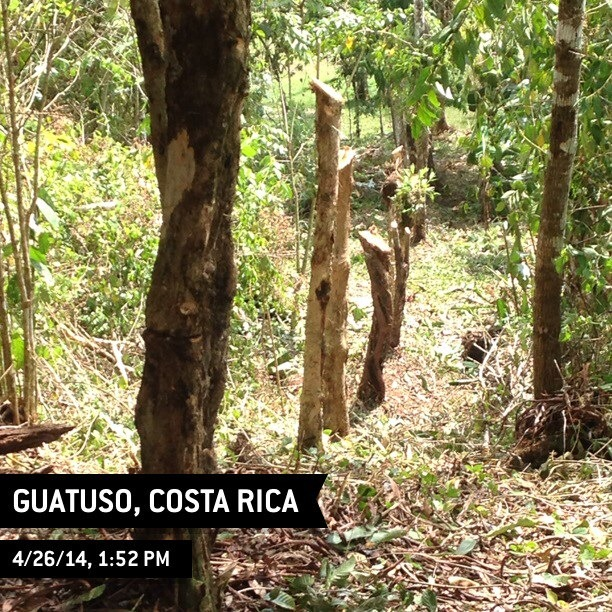 Cleared forest in Guatuso, Costa Rica