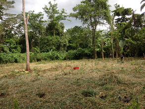 Area of 900 trees planted September 8th