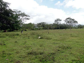 Jeffrey's land - will plant around the edge