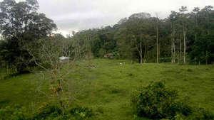 Planting day, 12/2011 at Viento Fresco, Guatuso