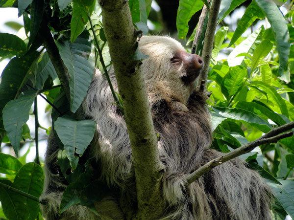 Restoring Forests in Guatuso, Alajuela, Costa Rica