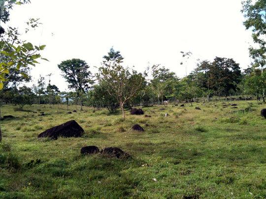 Arias farm land 2