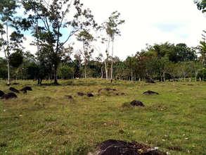 Arias family farm