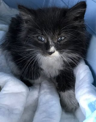 This little guy was found in a wheel well!