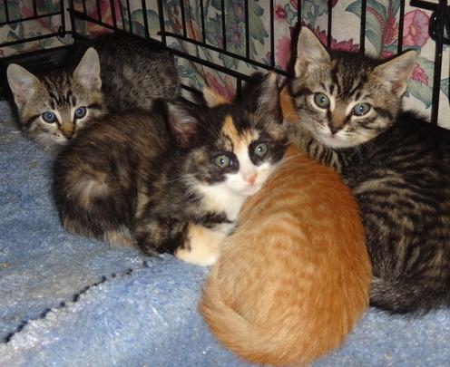 Kittens found in a trash heap