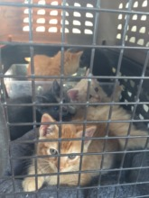 5 Kittens from Orange County