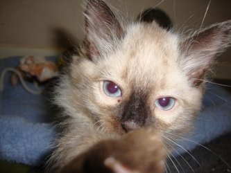 Homes for Paws: Loving homes for homeless cats