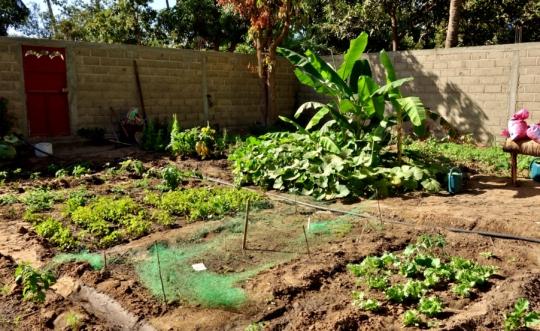 A corner of MDG's Bango agricultural property
